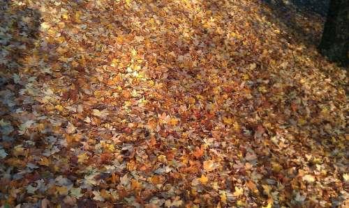 Leaves Leaf Fall Autumn Autumn Leaves