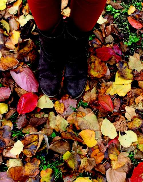 Leaves Autumn Legs Feet Prato