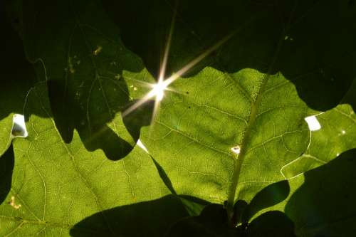 Leaves Glint Sun Sunshine Shade Green