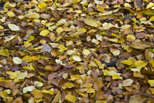 Leaves Autumn Emerge Fall Foliage Ground