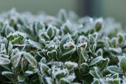 Leaves Ripe Winter Frozen Eiskristalle
