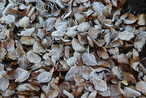 Leaves Forest Winter Frost Icy