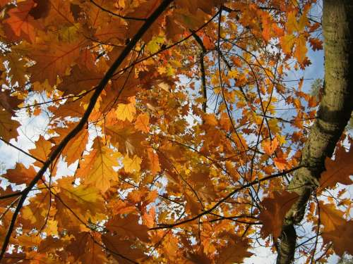 Leaves Autumn Emerge Orange Golden Bright
