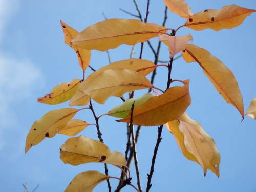 Leaves Last November Emerge Autumn Forest Yellow