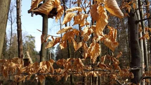 Leaves Colorful Autumn Trees Sheet Rain Leaf