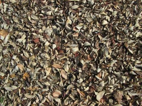 Leaves Leaf Texture Nature Vegetation Ground Cover