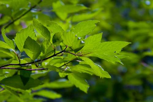 Leaves Leaf Green Nature Colorful Plant Summer