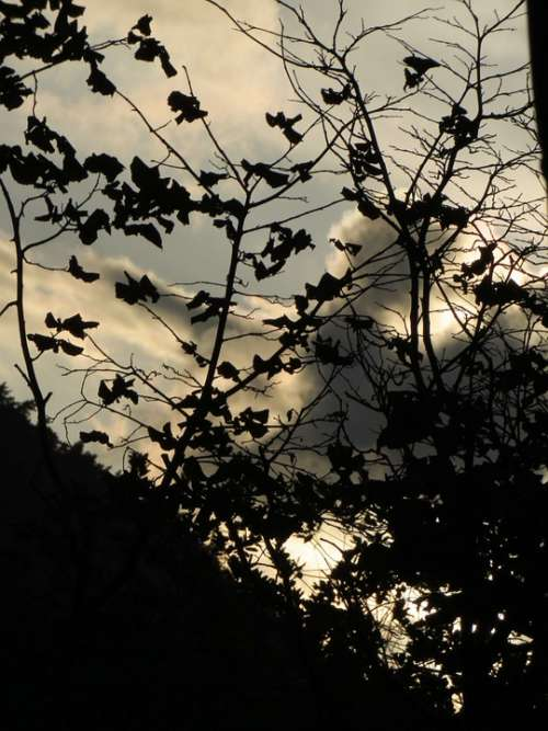 Leaves Backlighting Clouds Dark Evening Branch