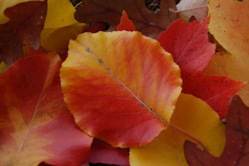 Leaves Autumn Fall Nature Red Orange Yellow