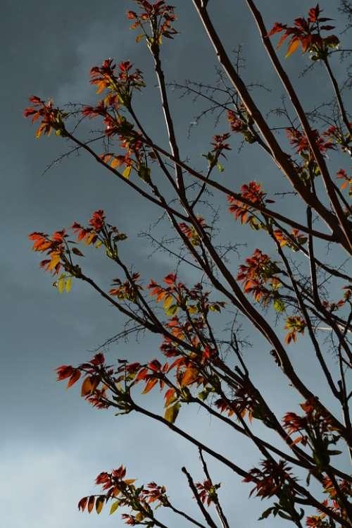 Leaves Clouds Sky