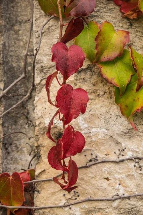 Leaves Red Golden Autumn Fall Foliage Leaf Season