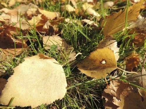 Leaves Autumn Ocher Meadow Yellowish Macro