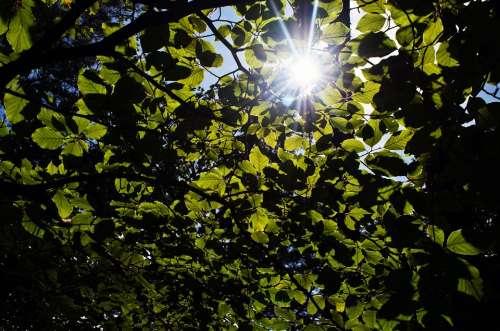 Leaves Leaf Green Season Sun Macro Nature