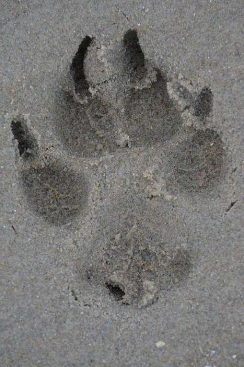 Leg Dog Print Sand