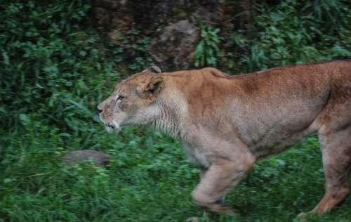 Leon Nature Africa
