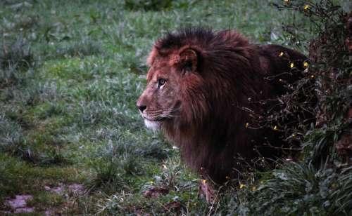 Leon Nature Animals Fauna