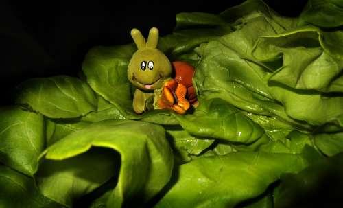 Lettuce Leaf Caterpillar Animal Salad Nature