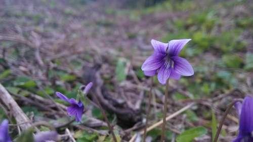 Little Flower Wild Flowers Plant Flower