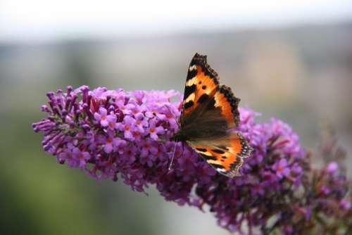 Little Fox Butterfly Blossom Bloom