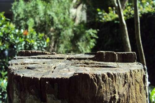 Log Tree Cut Tree Old Tree Dried Tree Log
