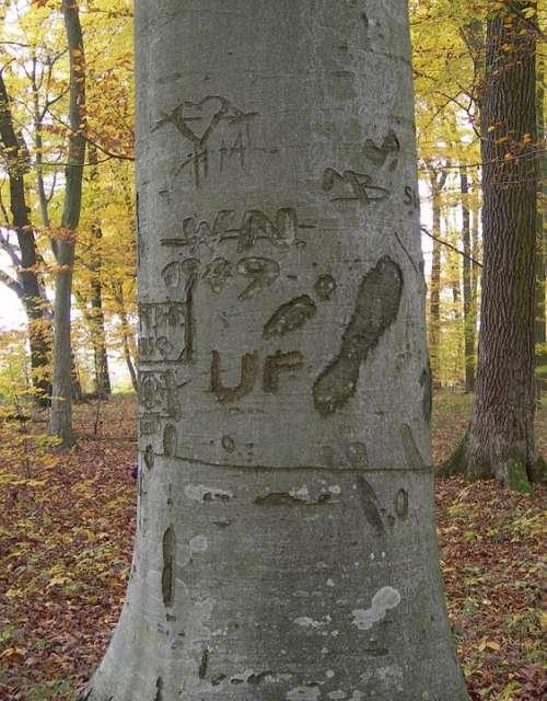 Log Forest Engraved Bark Nature Autumn Forest