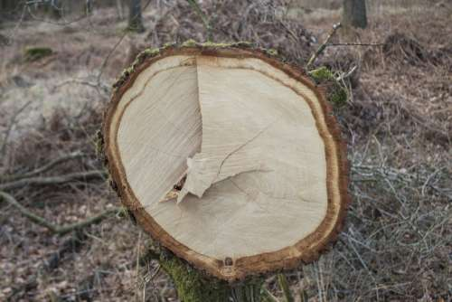Log Bark Sawed Off Forest Like Annual Rings