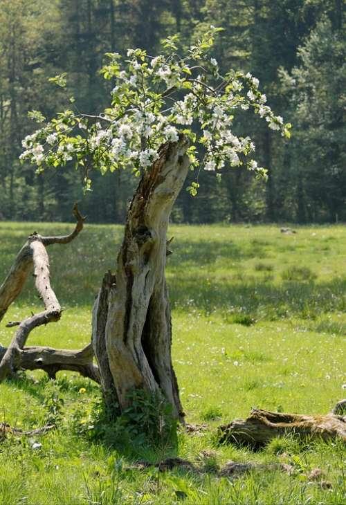 Log Blossom Tree Wood Old Nature Plant Transient