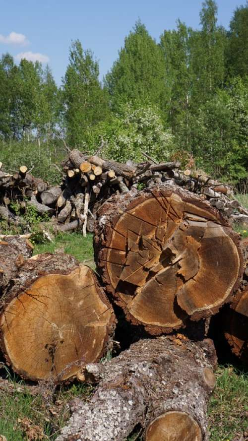 Log Cutoffs Tree Wood Industry Felled Tree