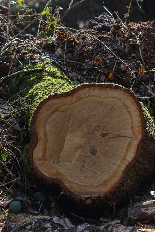 Log Moss Nature Forest