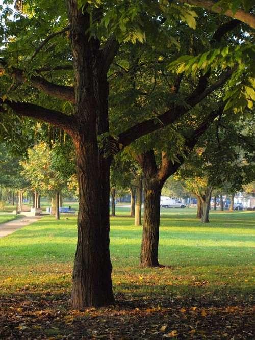 Log Main Park Main Banks Main Aue Meadow Bank
