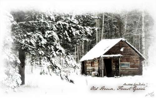 Log Cabin House Old Winter Forest Grove