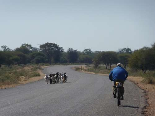 Lonely Africa Cyclist