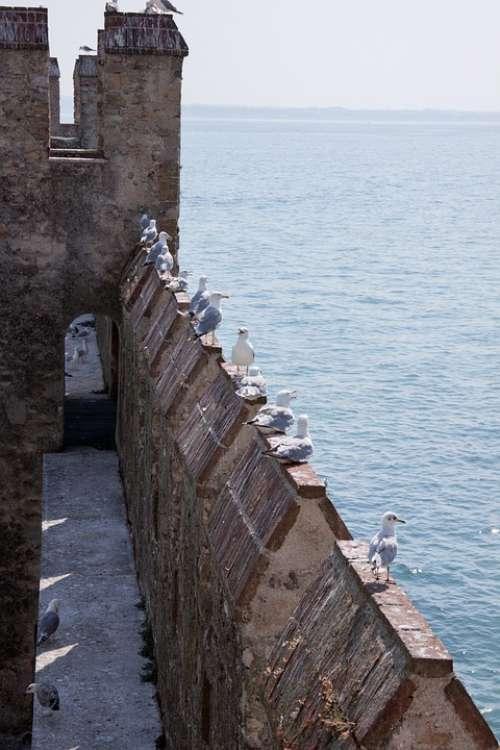 Loopholes Battlements Gulls Castle Fortress