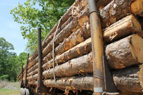 Lumber Trailer Wood Tree Trunk Dead Tree Cutting
