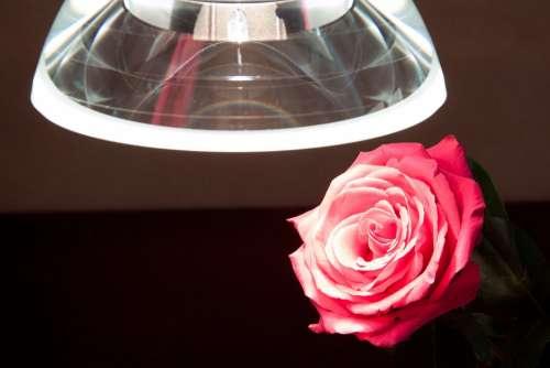 Lumina Galileo Pendant Lamp Thickness Crystal Glass