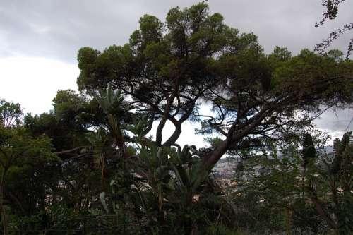 Madeira Funchal Botanical Garden