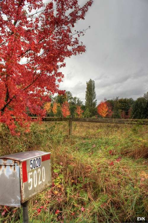 Mailbox Nature Red Trees Sky Autumn