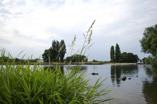 Main Water Sky Trees Landscape Gün Scenic Reed