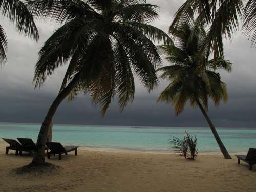 Maldives Palms Beach Sand Sea Bad Weather