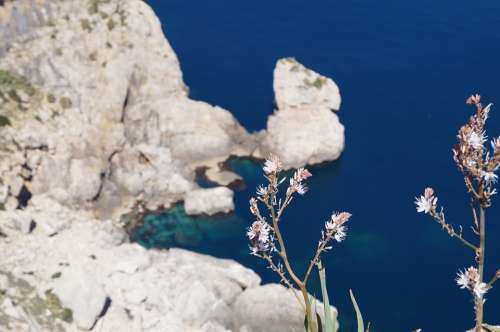 Mallorca Cap Formentor Nature Rock Flowers Sea