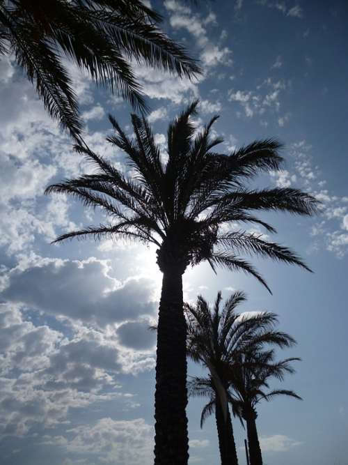 Mallorca Palm Trees Sun