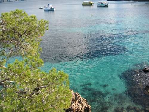 Mallorca Bay Nature Rock Tree Water Blue