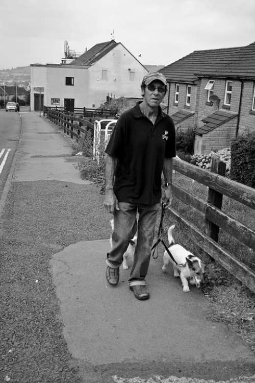 Man Walking Dogs Male Person Walk