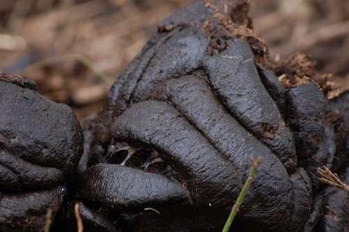 Manure Feces Excreta Excrement Dejection Compost