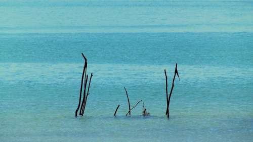 Mar Beach Water Bay Ocean Fish Cove Nature