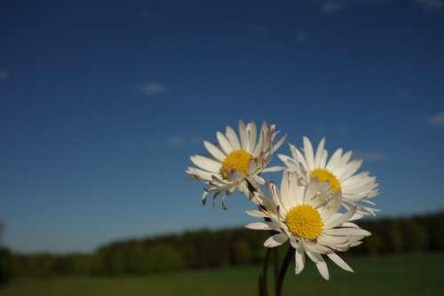 Margin Rides Flower Mage Rites Spring