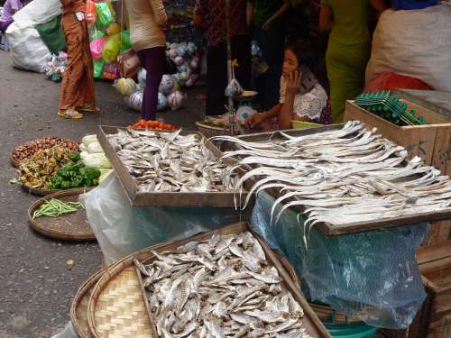 Market Traditional Asia Fish Burma Myanmar Yangon