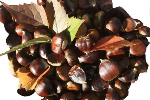 Maroni Sweet Chestnuts Fruits Brown Autumn