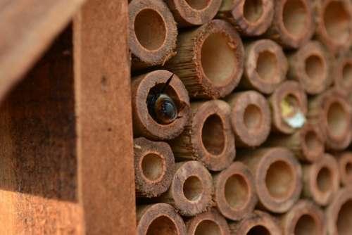 Mason Bee Bee Osmia Insect House Bamboo