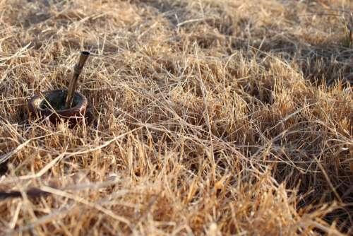 Matt Grass Field Bulb